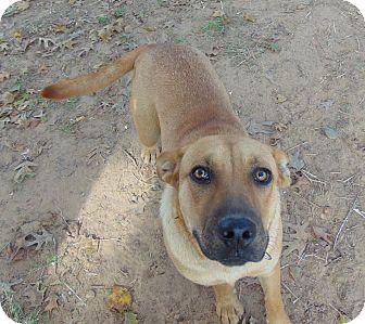 Labrador Retriever/Black Mouth Cur Mix Dog for adoption in Seattle, Washington - Minnie