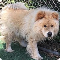 Adopt A Pet :: Leon - Chula Vista, CA