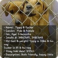 Adopt A Pet :: Tabitha/TUCKER - Stamford, CT