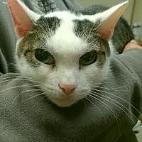 Adopt A Pet :: Squidward - Camden, DE