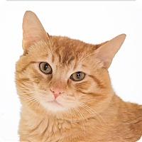 Adopt A Pet :: Miami - San Luis Obispo, CA