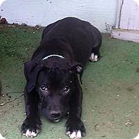 Adopt A Pet :: Tank - Wichita Falls, TX