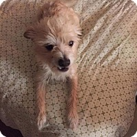 Adopt A Pet :: Spade - Lehigh Acres, FL