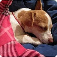 Adopt A Pet :: Irvine - Seattle, WA