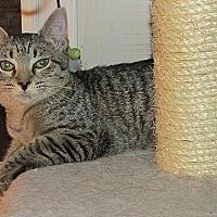 Adopt A Pet :: Venus Roman Godess - Tampa, FL