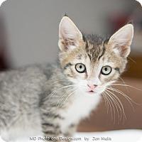 Adopt A Pet :: Brian - Fountain Hills, AZ