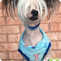 Adopt A Pet :: Finn-Adoption pending - Bridgeton, MO