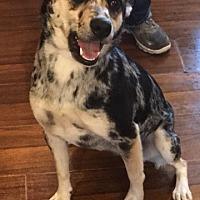 Adopt A Pet :: Alana - Russellville, KY