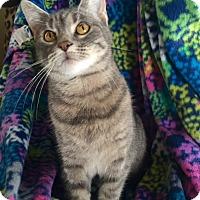 Adopt A Pet :: Ginny - Bloomsburg, PA