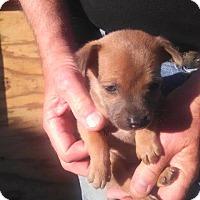 Adopt A Pet :: Larry - Ocala, FL