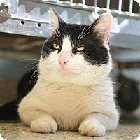 Adopt A Pet :: O'Sean - Scituate, MA