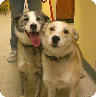 Australian Shepherd Mix Dog for adoption in Ridgely, Maryland - Mia and Kisses