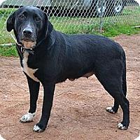 Adopt A Pet :: Lovey - Athens, GA