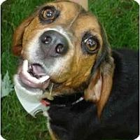 Adopt A Pet :: Cassie - Indianapolis, IN