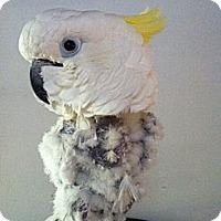 Adopt A Pet :: Roxanne - Lenexa, KS