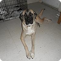 Adopt A Pet :: Libby - Hamilton, ON
