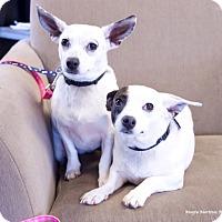 Adopt A Pet :: Ellie & Ava - Hamburg, PA