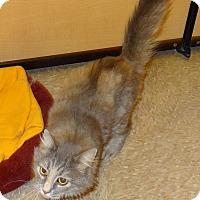 Adopt A Pet :: Jewel - Bentonville, AR