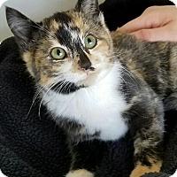 Adopt A Pet :: Emily - Monrovia, CA