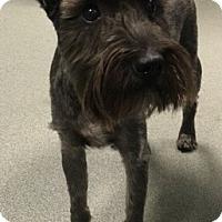 Adopt A Pet :: New Boy - Laurel, MD