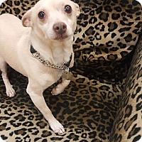 Adopt A Pet :: Frampton - Valencia, CA
