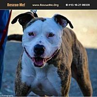 Adopt A Pet :: Sheba - Norco, CA