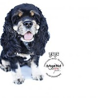 Adopt A Pet :: Lady Yaya - Sherman Oaks, CA