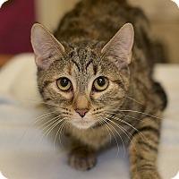 Adopt A Pet :: Holly - Medina, OH