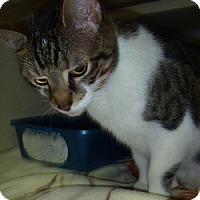 Adopt A Pet :: Scout - Hamburg, NY
