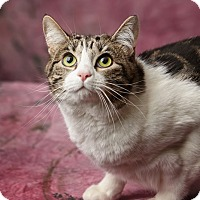 Adopt A Pet :: Gloria - Harrisonburg, VA