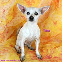Adopt A Pet :: Tara - Bloomington, MN