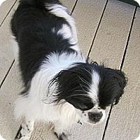 Adopt A Pet :: Gus - Aurora, CO