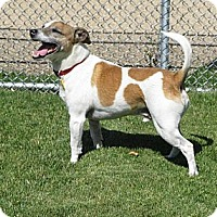 Adopt A Pet :: CHAMP - Scottsdale, AZ