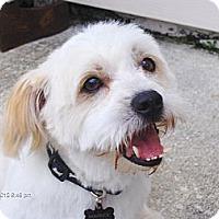 Adopt A Pet :: Mavrick - Orange Park, FL