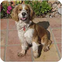 Adopt A Pet :: Kira - Phoenix, AZ