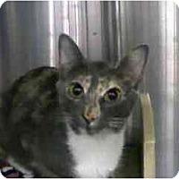 Adopt A Pet :: Jade - Greenville, SC