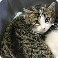 Adopt A Pet :: Glinda - Medina, OH