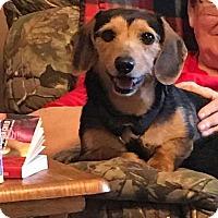 Adopt A Pet :: Badger - E. Greenwhich, RI