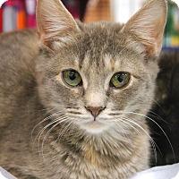 Adopt A Pet :: Peyton - Smithtown, NY