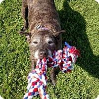 Adopt A Pet :: Kali - Hawthorne, CA