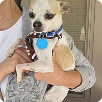 Adopt A Pet :: Smokey - Kingwood, TX