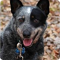 Adopt A Pet :: Meara - Siler City, NC