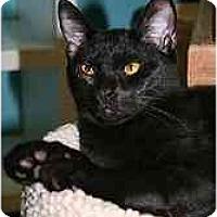 Adopt A Pet :: Perry - Marietta, GA