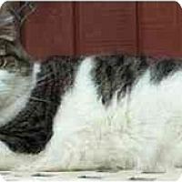 Adopt A Pet :: Odessa - Acme, PA