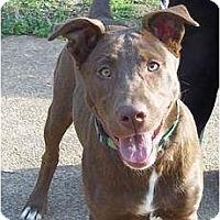 Adopt A Pet :: Jewels - Adamsville, TN