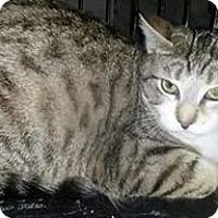 Adopt A Pet :: Sparky - Brampton, ON