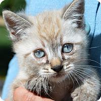 Adopt A Pet :: Christian - Stanford, CA