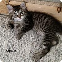 Adopt A Pet :: Gulliver - Portland, OR