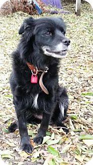 Border Collie Mix Dog for adoption in Saskatoon, Saskatchewan - Sizzle