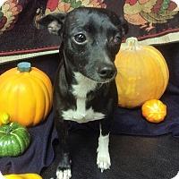 Adopt A Pet :: Sissie - Tavares, FL